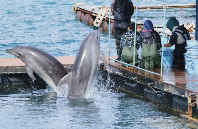 Dolphin Project:  за кадром «Бухты»